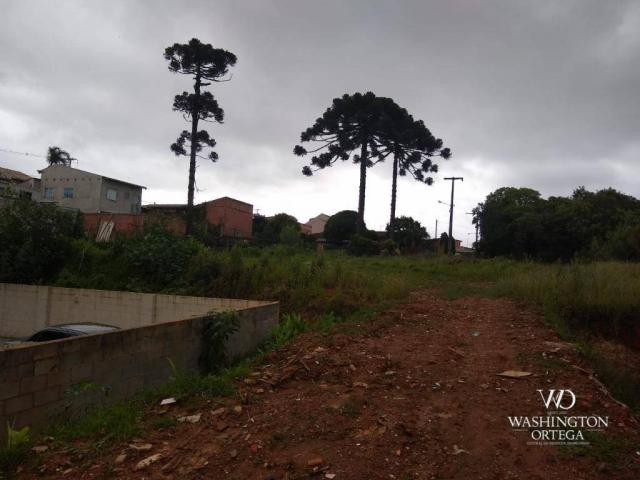 Terreno à venda, 4990 m² por r$ 1.700.000,00 - santo antônio - são josé dos pinhais/pr - Foto 4