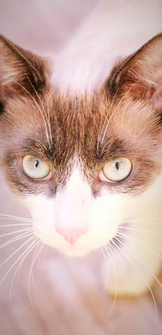 Casal de Gatos para adoção responsável - Foto 2