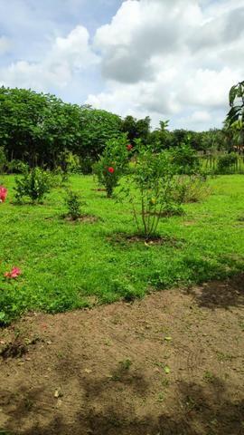 Fazenda com 140 hectares, linda casa, potencial para agropecuária e indústria de britagem - Foto 13