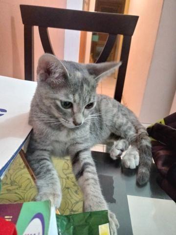 Adoção de Gata 4 meses - Foto 3