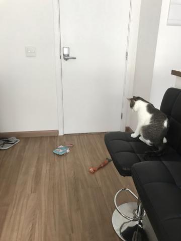 Hotel de cachorro/gato * cuidadora de pets * hospedagem