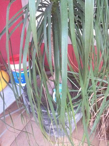 Vasos de cimeno com plantas - Foto 2