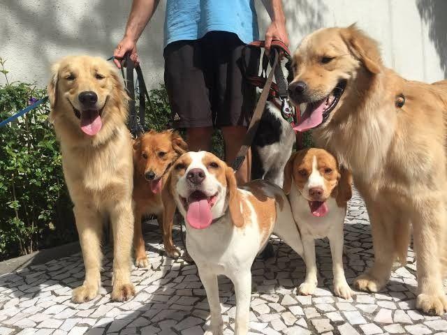 Passeios com cães