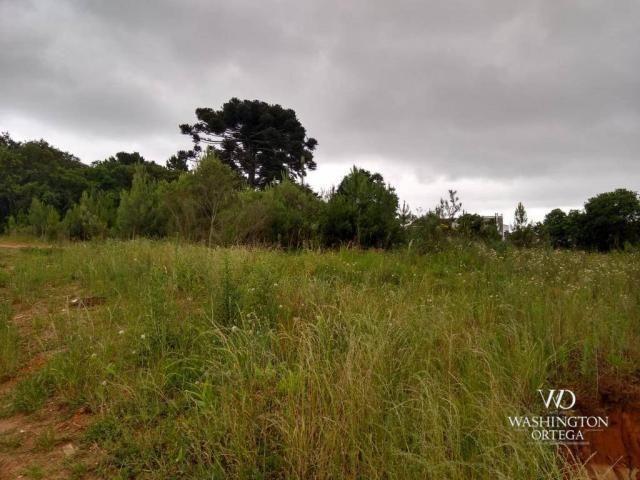 Terreno à venda, 4990 m² por r$ 1.700.000,00 - santo antônio - são josé dos pinhais/pr - Foto 5