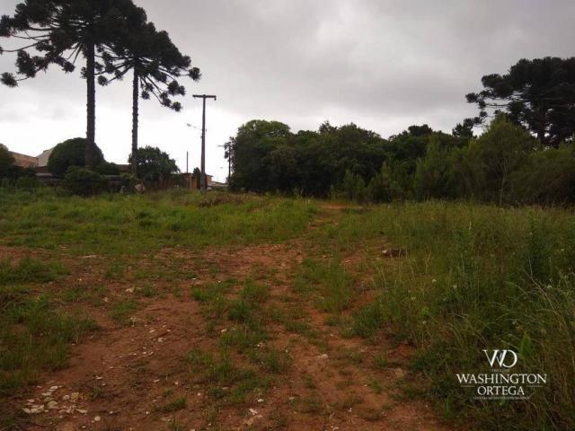 Terreno à venda, 4990 m² por r$ 1.700.000,00 - santo antônio - são josé dos pinhais/pr - Foto 6