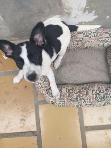Doação de dog - Foto 2
