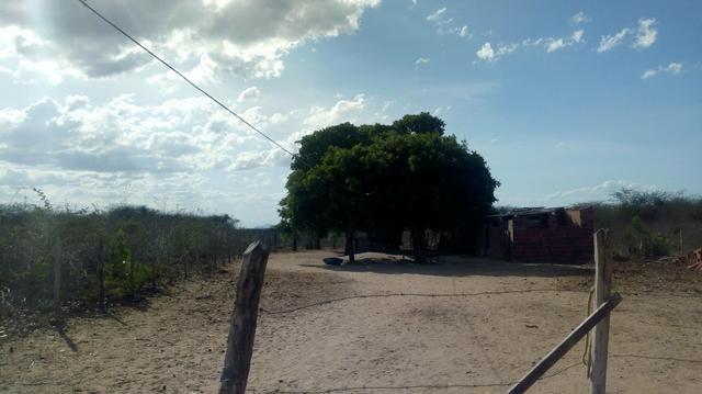 Vende-se terreno em Ocara - ce ou troco em outro terreno na região de Aquiraz - Foto 12