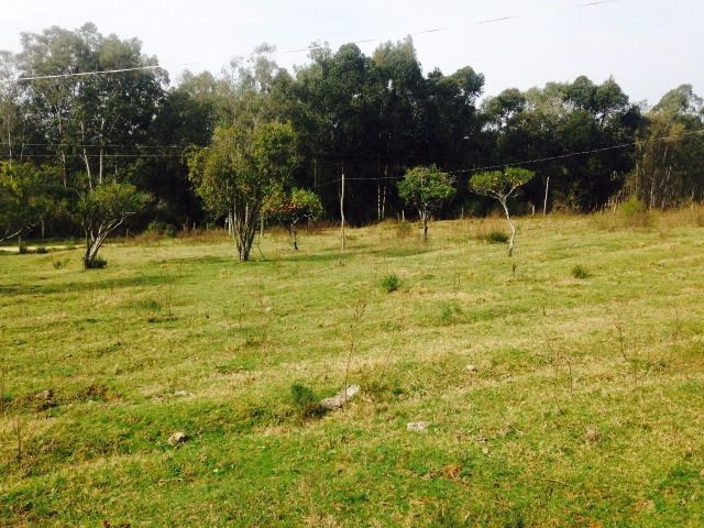 Chácara 3,17 ha -185 mil c/casa Santana do Livramento Rs - Foto 4
