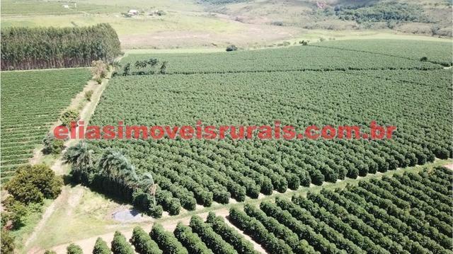 Fazenda de café - 110.000 pés - Patrocínio - MG - Foto 19