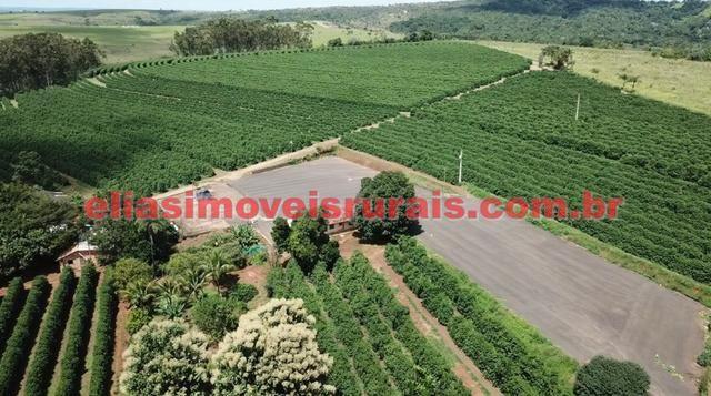 Fazenda de café - 110.000 pés - Patrocínio - MG - Foto 6