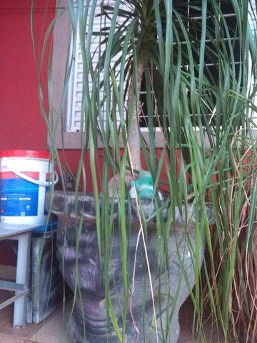Vasos de cimeno com plantas - Foto 4