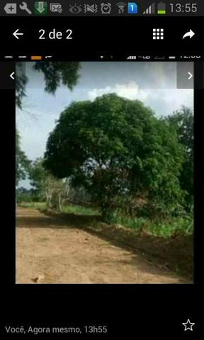Vendo terreno no ramal da castanheira