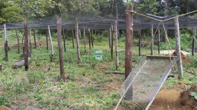 Fazenda localizada na cidade de Taperoá. - Foto 13