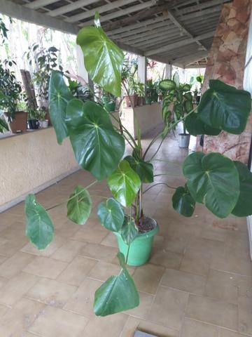 Plantas e mudas - Foto 3