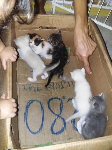 Doações de gatos - Foto 2