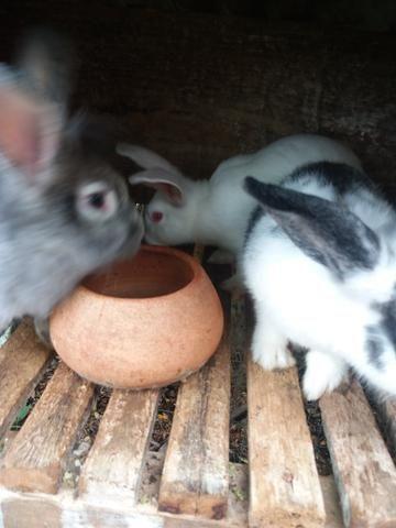Vendo coelhos - Foto 4
