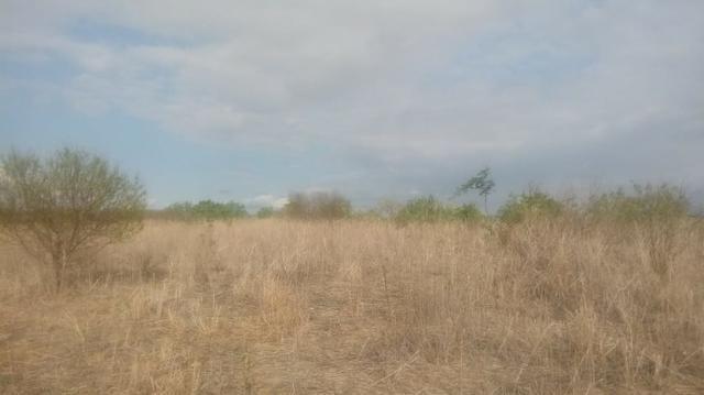 Ótima propriedade de 120 hectares, 70% plana, em Gravatá-PE. Por apenas R$ 780 mil! - Foto 3