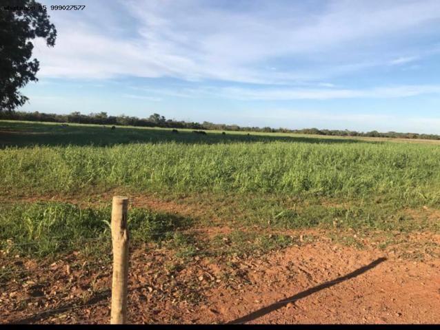 Fazenda para Venda em Jaciara, Jaciara - Foto 16