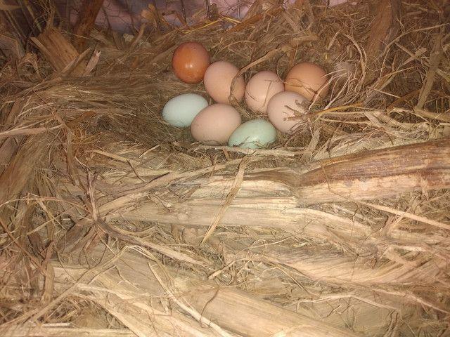 Ovos caipira galados por encomenda - Foto 2
