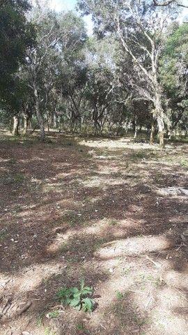 Terreno no Campo do Tenente R$ 80.000 - Foto 4