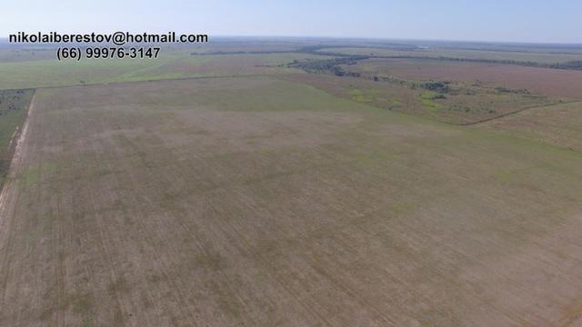 Fazenda sul do pará 9.700 hectares nikolaiimoveis