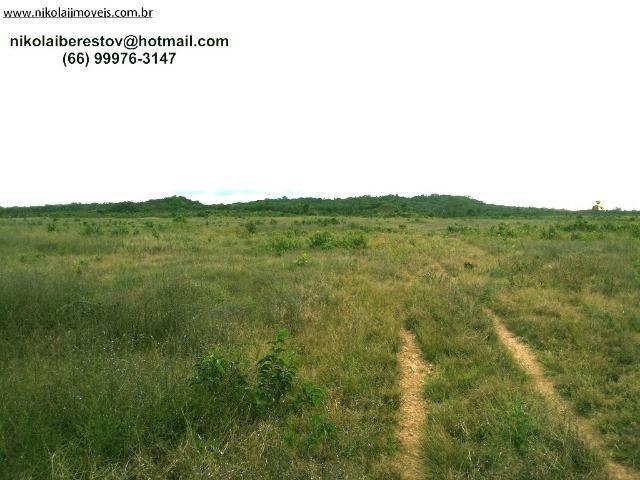 Fazenda nordeste mt 300 hectares nikolaiimoveis