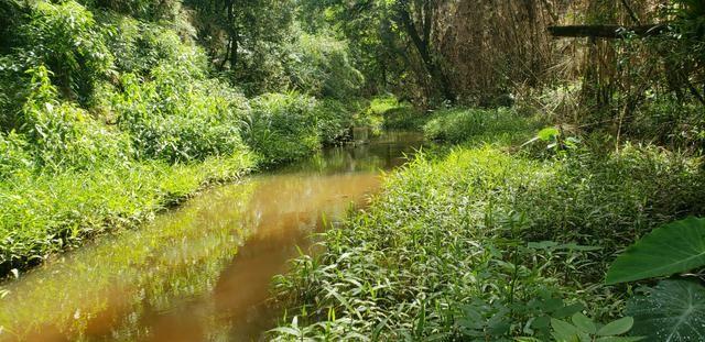 Chácara Agudos do Sul - 50 mts da Br c/ Tanque e rio - Foto 18