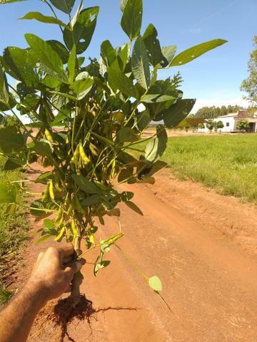 Fazenda para Soja com 6.200 hectares - Foto 4