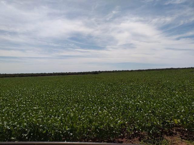Fazenda para Soja com 6.200 hectares