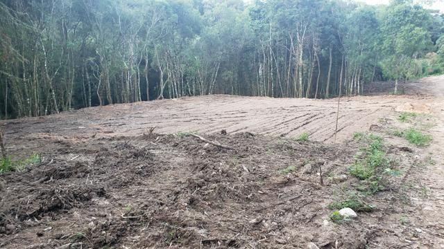 Chácara Agudos do Sul - 50 mts da Br c/ Tanque e rio - Foto 5