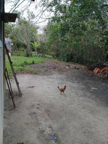 Sítio no bairro Chavão/Santo Antonio, Cabo Frio-RJ. 6.000m² - Foto 18