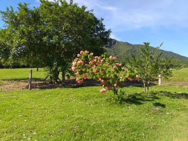 Vendo chácara na agrovila das palmeiras porteira fechada - Foto 11