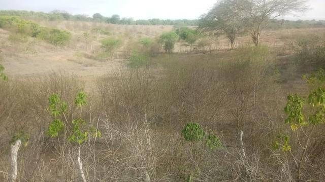Ótima propriedade de 120 hectares, 70% plana, em Gravatá-PE. Por apenas R$ 780 mil! - Foto 8