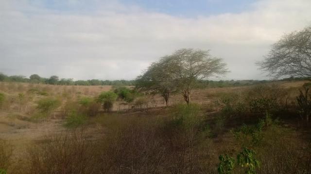 Ótima propriedade de 120 hectares, 70% plana, em Gravatá-PE. Por apenas R$ 780 mil! - Foto 5