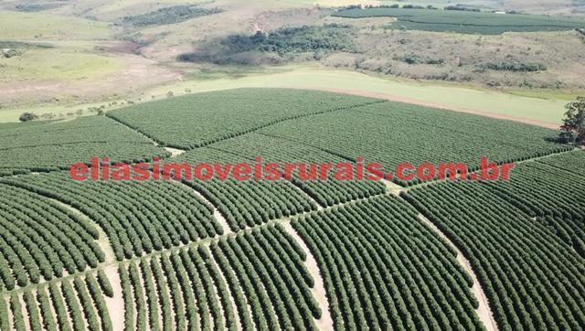 Fazenda de café - 110.000 pés - Patrocínio - MG - Foto 13