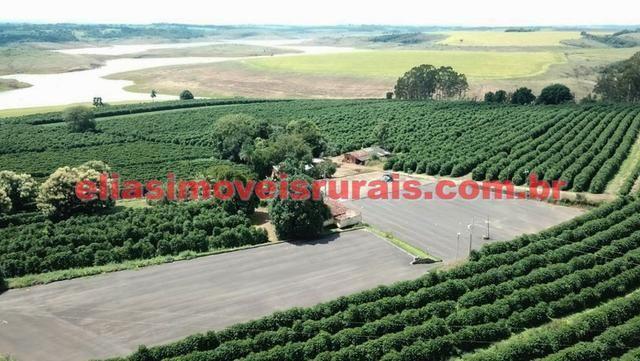 Fazenda de café - 110.000 pés - Patrocínio - MG