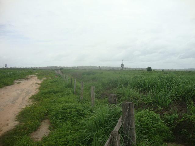 80 km do asfalto, Itinga-MA. 221 alqueires - Foto 5