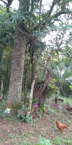 Área Colônia Zacarias - Foto 10