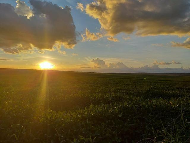 Fazenda para Soja com 6.200 hectares - Foto 2