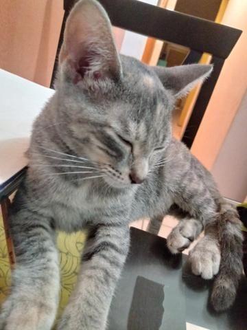 Adoção de Gata 4 meses - Foto 4