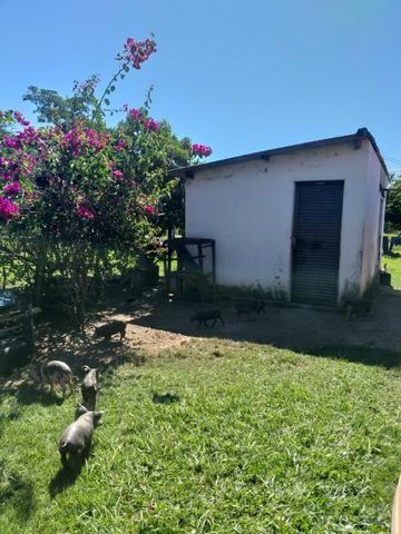 Vendo chácara na agrovila das palmeiras porteira fechada - Foto 6