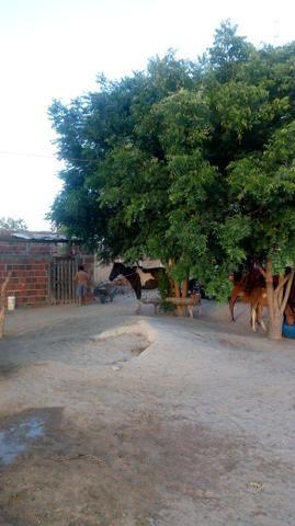 Vende-se terreno em Ocara - ce ou troco em outro terreno na região de Aquiraz - Foto 6