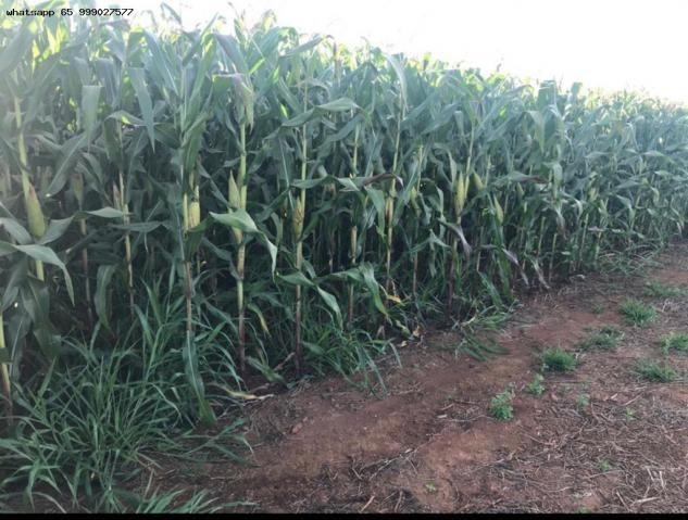 Fazenda para Venda em Jaciara, Jaciara - Foto 10