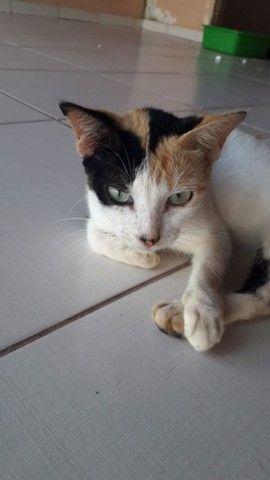 Doação Responsável Gatinha Castrada 5 meses - Foto 3