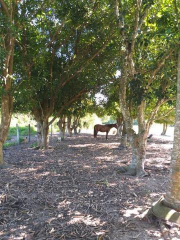 Vendo chácara na agrovila das palmeiras porteira fechada - Foto 12