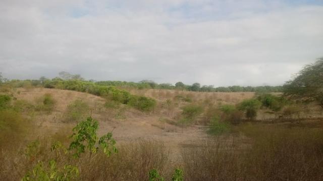 Ótima propriedade de 120 hectares, 70% plana, em Gravatá-PE. Por apenas R$ 780 mil!