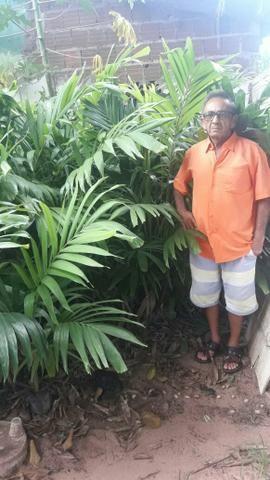 Palmeira a parti de 5,00 - Foto 2