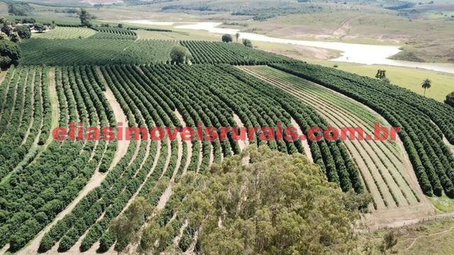 Fazenda de café - 110.000 pés - Patrocínio - MG - Foto 18