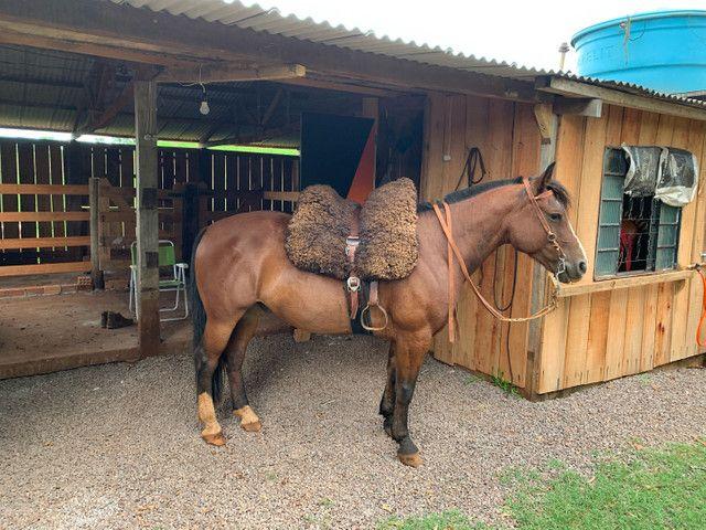 Cavalo Crioulo confirmado!!