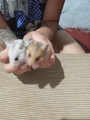 Vende se hamster  - Foto 2